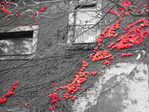 Παλαιό κτήριο με τις κόκκινες εγκαταστάσεις στοκ εικόνες