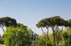 Παλαιό κτήριο πέρα από τα πεύκα ομπρελών στη Ρώμη Στοκ εικόνα με δικαίωμα ελεύθερης χρήσης
