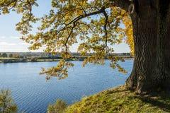 Παλαιό μεγάλο δέντρο στο υπόβαθρο χρώματος με το μπλε ουρανό Στοκ Εικόνες