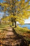 Παλαιό μεγάλο δέντρο στο υπόβαθρο χρώματος με το μπλε ουρανό Στοκ φωτογραφίες με δικαίωμα ελεύθερης χρήσης