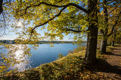 Παλαιό μεγάλο δέντρο στο υπόβαθρο χρώματος με το μπλε ουρανό Στοκ εικόνα με δικαίωμα ελεύθερης χρήσης