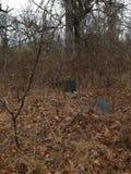 Παλαιό νεκροταφείο χωρών Στοκ εικόνες με δικαίωμα ελεύθερης χρήσης