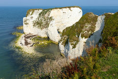 Παλαιό νησί βράχων του Harry απότομων βράχων κιμωλίας Purbeck στη νότια Αγγλία UK του Dorset Στοκ Φωτογραφία