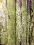 παλαιό ξεπερασμένο δάσος Στοκ φωτογραφία με δικαίωμα ελεύθερης χρήσης