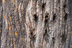 Παλαιό ξύλινο δέντρο Στοκ Φωτογραφία