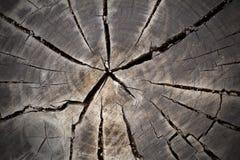 Παλαιό ξύλινο κολόβωμα δέντρων Στοκ Εικόνες
