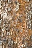 Παλαιό ξύλινο (φλοιός, φλοιός) υπόβαθρο σύστασης δέντρων Στοκ φωτογραφία με δικαίωμα ελεύθερης χρήσης