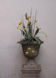 Παλαιό δοχείο λουλουδιών με Daffodils Στοκ φωτογραφία με δικαίωμα ελεύθερης χρήσης