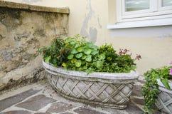 παλαιό δοχείο λουλου&de Στοκ εικόνα με δικαίωμα ελεύθερης χρήσης