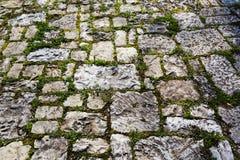 Παλαιό πεζοδρόμιο κυβόλινθων με το βρύο Στοκ φωτογραφία με δικαίωμα ελεύθερης χρήσης