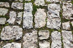 Παλαιό πεζοδρόμιο κυβόλινθων με το βρύο Στοκ Φωτογραφίες