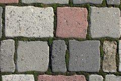 Παλαιό πεζοδρόμιο των χρωματισμένων πετρών με την ανάπτυξη του βρύου στη ραφή Στοκ Εικόνες