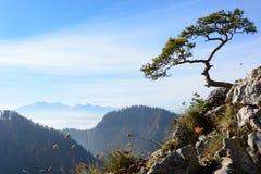 Παλαιό πεύκο λειψάνων στο βουνό Sokolica Στοκ φωτογραφία με δικαίωμα ελεύθερης χρήσης