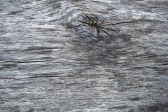 παλαιό πρότυπο ξύλινο Στοκ φωτογραφία με δικαίωμα ελεύθερης χρήσης