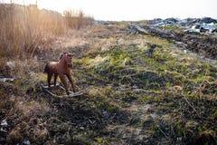 Παλαιό ριγμένο άλογο μακριά λικνίσματος Στοκ εικόνα με δικαίωμα ελεύθερης χρήσης
