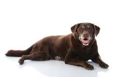 Παλαιό σκυλί Στοκ Φωτογραφία