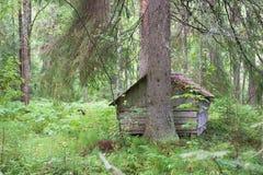 Παλαιό στερεό καταφύγιο καμπινών κούτσουρων που κρύβεται Στοκ Φωτογραφίες