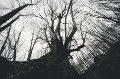 Παλαιό στριμμένο σκοτεινό δέντρο Στοκ εικόνα με δικαίωμα ελεύθερης χρήσης