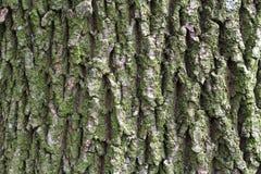 παλαιό τραχύ δάσος σύστασης Ξύλινη ανασκόπηση σύστασης Υπόβαθρο σύστασης δέντρων Σύσταση δέντρων ρωγμών Παλαιά σύσταση δέντρων Στοκ Εικόνες