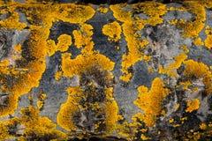 παλαιό τραχύ δάσος σύστασης Ξύλινη σύσταση Ξύλινη ανασκόπηση δέντρο λεπτομέρειας οι ακτίνες ανασκόπησης κλείνουν να καταρρίψουν τ Στοκ Εικόνα