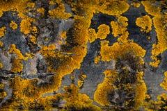 παλαιό τραχύ δάσος σύστασης Ξύλινη σύσταση Ξύλινη ανασκόπηση δέντρο λεπτομέρειας οι ακτίνες ανασκόπησης κλείνουν να καταρρίψουν τ Στοκ φωτογραφία με δικαίωμα ελεύθερης χρήσης