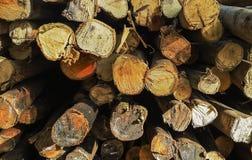 Παλαιό υπόβαθρο διατομής ξυλείας Στοκ φωτογραφία με δικαίωμα ελεύθερης χρήσης