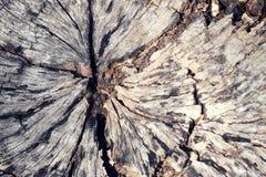 Παλαιό υπόβαθρο σύστασης κολοβωμάτων ρωγμών ξύλινο Στοκ εικόνες με δικαίωμα ελεύθερης χρήσης