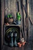 Παλαιό υπόστεγο με τα εργαλεία κήπων και τις φρέσκες εγκαταστάσεις Στοκ φωτογραφίες με δικαίωμα ελεύθερης χρήσης