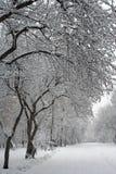 Παλαιό Apple-δέντρο στο χειμερινό πάρκο Στοκ Εικόνες