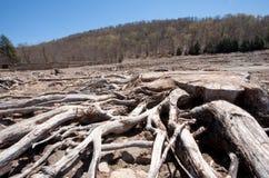 Παλαιό Driftwood στα ξύλα Στοκ φωτογραφίες με δικαίωμα ελεύθερης χρήσης