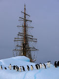 Παλαιό tallship ή sailboat με το adelie penguin Στοκ Εικόνες