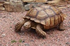Παλαιό Tortoise Στοκ φωτογραφίες με δικαίωμα ελεύθερης χρήσης