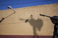 Παλαιό Trinidat Σκιά ενός ατόμου με το βιολοντσέλο Στοκ εικόνα με δικαίωμα ελεύθερης χρήσης