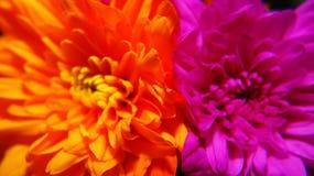 Παλεύοντας λουλούδια Στοκ φωτογραφία με δικαίωμα ελεύθερης χρήσης