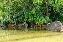 Παλιρροιακή λίμνη και τροπική ζούγκλα, koh kood, Ταϊλάνδη Στοκ Εικόνες