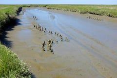 Παλιρροιακός κολπίσκος στοκ φωτογραφία