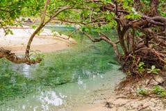 Παλιρροιακός κολπίσκος - Espiritu Santo στοκ εικόνες