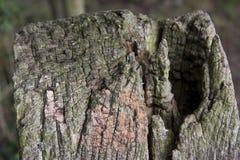 Παλιό κολόβωμα δέντρων Στοκ Εικόνες