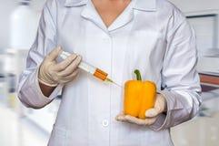 Πείραμα ΓΤΟ: Επιστήμονας που εγχέει το υγρό από τη σύριγγα στο pep Στοκ Εικόνα