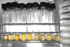 Πείραμα στο χημικό εργαστήριο με το κίτρινο υγρό για την ανάλυση Στοκ φωτογραφίες με δικαίωμα ελεύθερης χρήσης