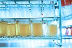 Πείραμα στο χημικό εργαστήριο με το κίτρινο υγρό για την ανάλυση Στοκ Φωτογραφίες