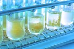 Πείραμα στο χημικό εργαστήριο με το κίτρινο υγρό για την ανάλυση Στοκ Εικόνες