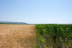 πεδία δημητριακών στοκ εικόνα με δικαίωμα ελεύθερης χρήσης