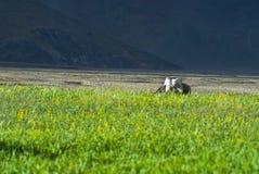 πεδία επαρχίας πράσινα στοκ φωτογραφία με δικαίωμα ελεύθερης χρήσης