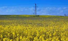 πεδία κίτρινα Στοκ Φωτογραφίες