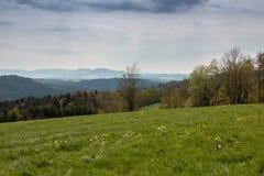 Πεδία και δάσος στοκ εικόνα με δικαίωμα ελεύθερης χρήσης
