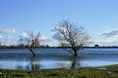 πεδία που πλημμυρίζουν στοκ φωτογραφίες