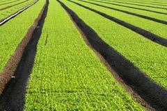 πεδία πράσινα στοκ φωτογραφία με δικαίωμα ελεύθερης χρήσης