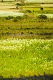 πεδία πράσινο Θιβέτ στοκ εικόνες