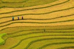 Πεδία ρυζιού Terrced - τρεις γυναίκες επισκέπτονται τα πεδία ρυζιού τους στη MU Cang Chai Στοκ Εικόνες